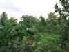 edible-forest-garden