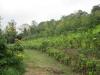 perennial-farming-systems