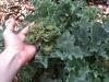 perennial-vegetables