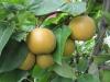 permaculture-plants