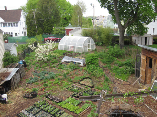 Permaculture Photo Gallery Perennial Organic Gardens Eric Toensmeier Plants Vines Groundcovers Trees on Small Orchard Layout Plan