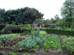 how to become a permaculture designer