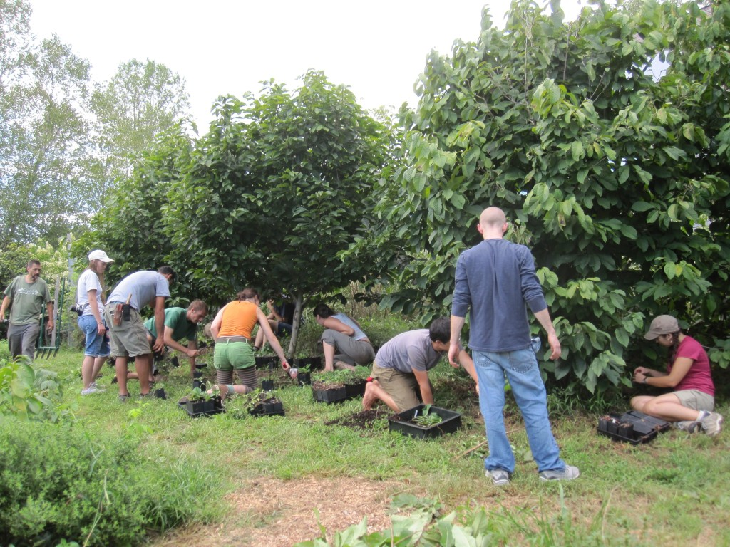 Planting understory polycultures beneath pawpaws at last year's workshop.