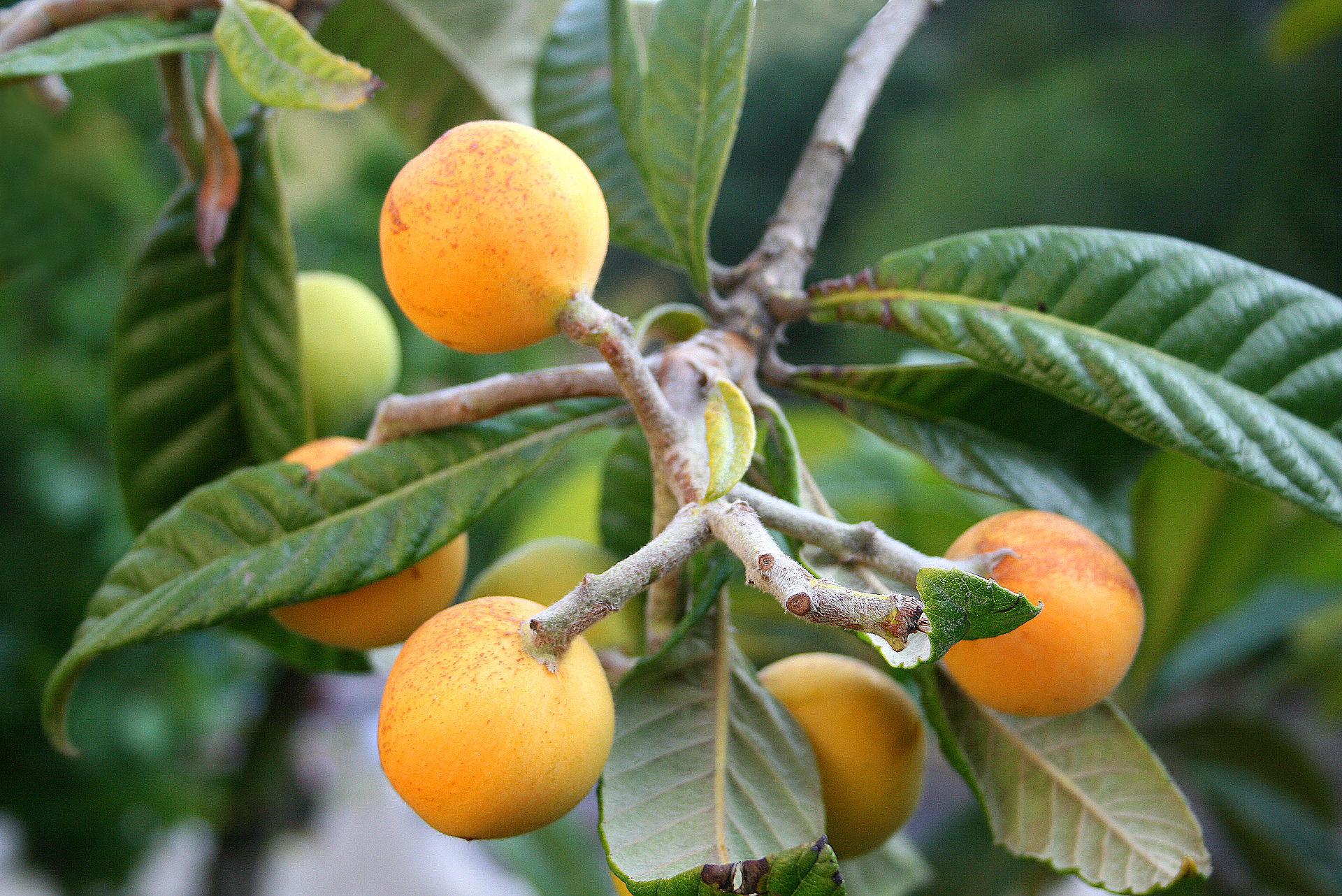 Fukuoka s food forest eric toensmeier for Fruit trees